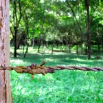 barbed-wire-cabuya-IMG_3341.JPG