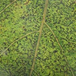 leaf-macro-Matthaei-IMG_9499-150x150.jpg